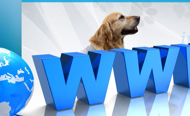 CURA PETS: new website